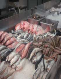Marine Food Supplies Supplier