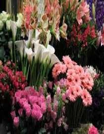 Fresh Flowers, Plants & Trees