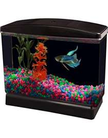 Aqua Culture, Aquarium & Supplies Supplier