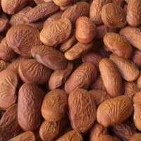 Pongamia Seed