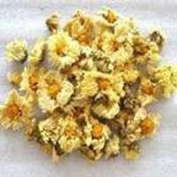 Hangzhou Chrysanthemum