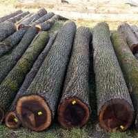 Walnut Wood Logs