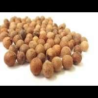 Sandalwood Seed