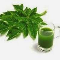 Papaya Leaf Extract