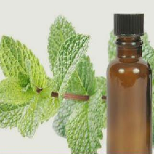 Mentha Citrata Oil