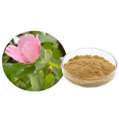 Hibiscus Rosa Sinensis Extract