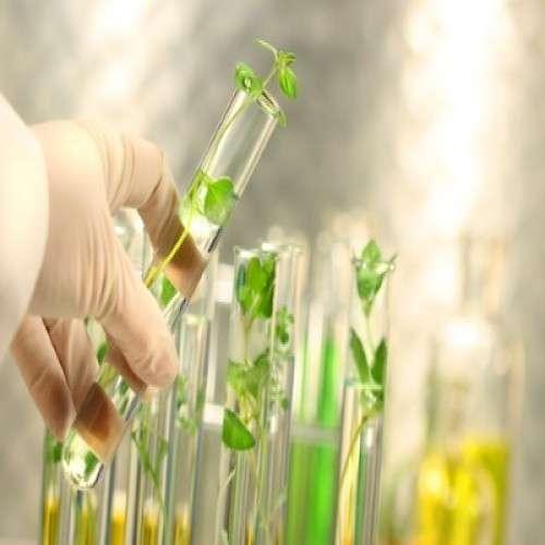 Botanical Extract