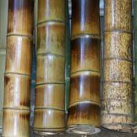Polished Bamboo Sticks