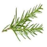 Rosemary Leave