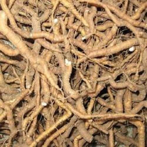 Ipecac Roots