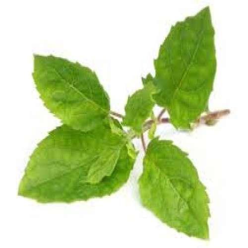 Holy Basil Leaves