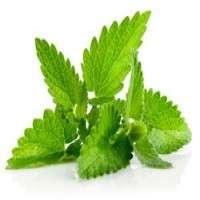 Herb Leaves