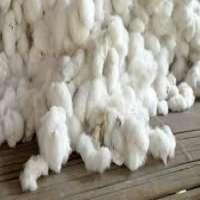 Cotton Fibers