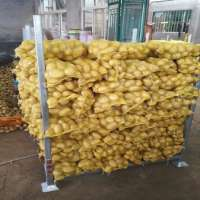 Exported Fresh potato