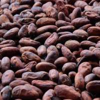 Coffee and cocoa beans Manufacturer