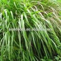lemongrass oil Pure Lemon Grass Oil
