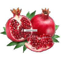 Pomegranates fresh Manufacturer