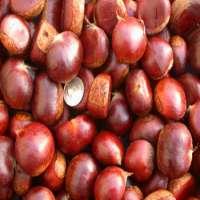 Fresh Chestnuts Raw Chestnuts Dried Chestnut