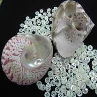 shell Garment button Manufacturer