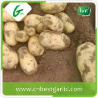 fresh Farm potatoes Manufacturer