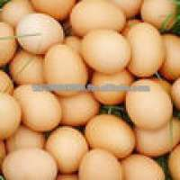 Fresh Poultry Eggs White Powder