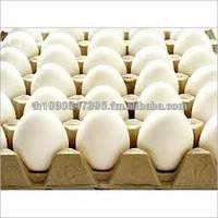 Fresh White EggsHallel EggsTable EggsPoultry EggsChicken Manufacturer