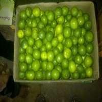 Eureka fresh Green Lime Manufacturer