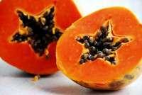 Tropical Orange Papaya