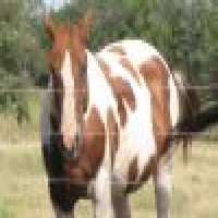 all colors of HORSE hair Manufacturer