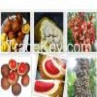 Tropical fruit seeds borneo fruit seeds   Manufacturer