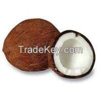 Fresh coconuts Manufacturer