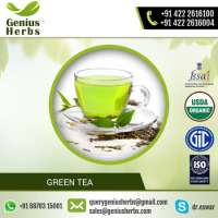 of Instant Energizer Green Tea Rate Manufacturer