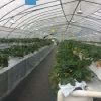 Tunnel Nursey Greenhouse Covering Manufacturer