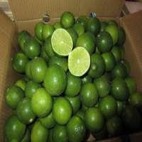 Fresh Lime and Lemons Manufacturer