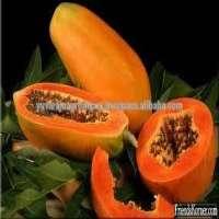 Fresh Papaya Manufacturer