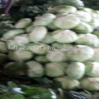 Fresh Green Cabbage  Manufacturer