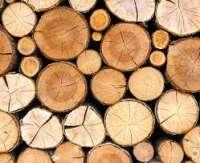 Timber Manufacturer
