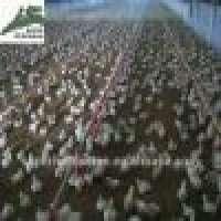 Poultry equipment chicken Manufacturer