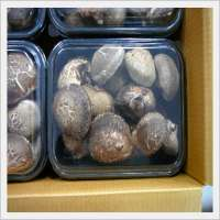 Shiitake Mushrooms Manufacturer