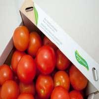 Quality Fresh Tomato