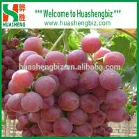 Fresh Red Grapes Manufacturer