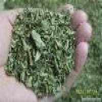 2011 crop green and natural oregano leaves Manufacturer