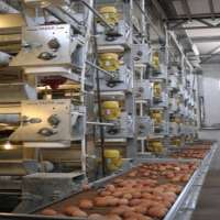 egg layer poultry farm