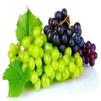Fresh Grapes Manufacturer