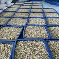 Prosessed Cashew Nut Kernel Manufacturer