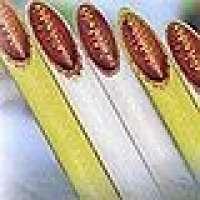 PEcoated copper tube Manufacturer