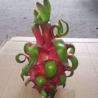 Dragon Fruit white flesh