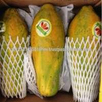 Fresh Papaya and Dried(Frozen) Papaya