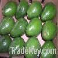 Tropical &amp subtropical fruit Manufacturer