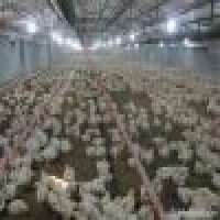 Poultry equipment Manufacturer
